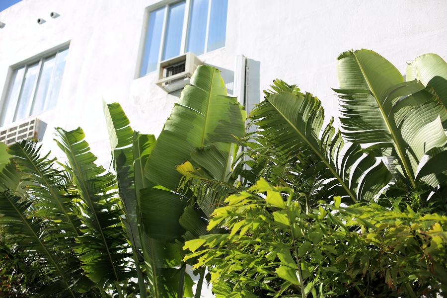 Hotel Croydon Miami Beach Review
