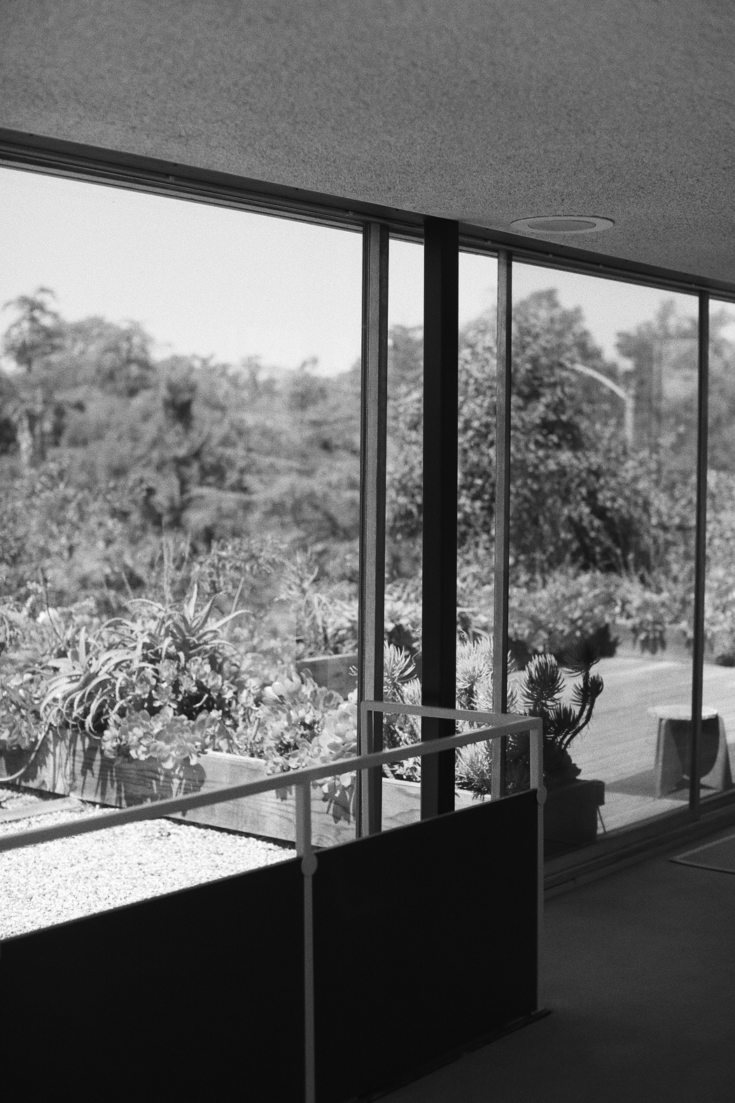 The Dashing Rider - Richard Neutra VDL House Silver Lake