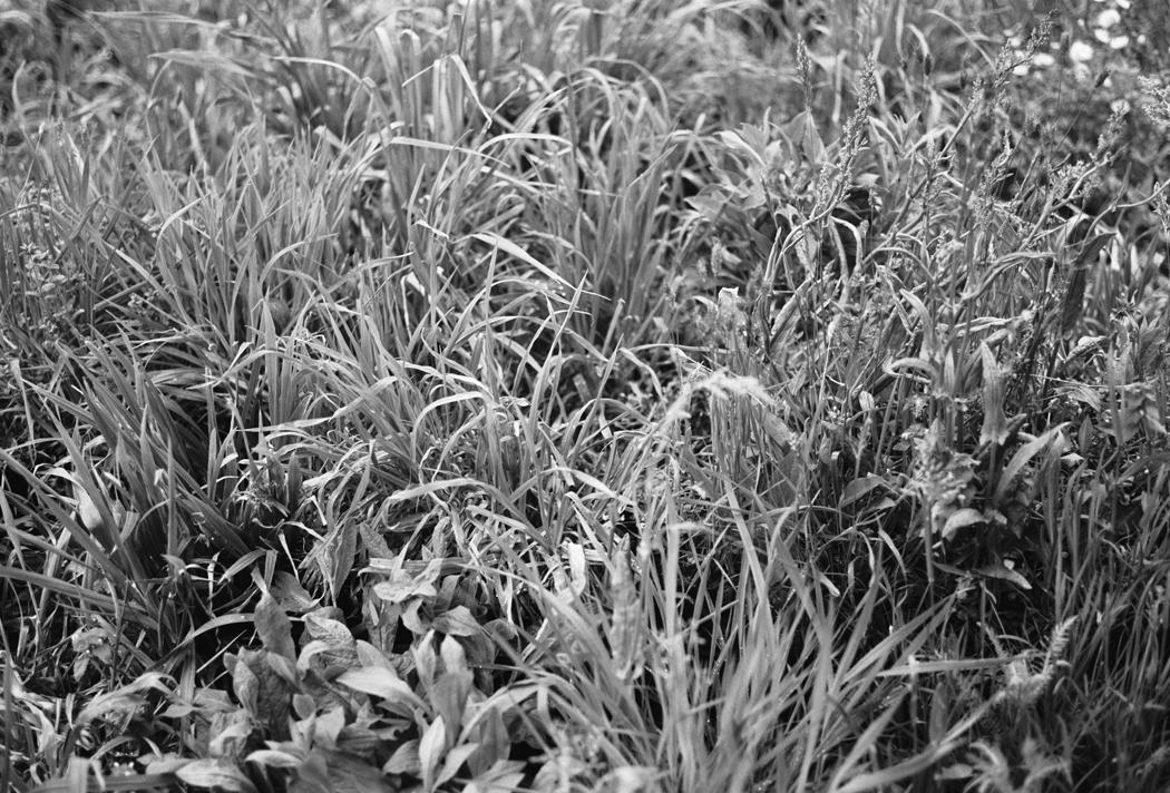 Adjacent Field by Linda Tegg. Jil Sander Headquarter Milan. Fiona Dinkelbach